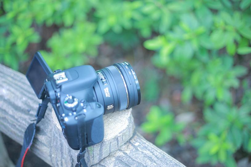 カメラと緑