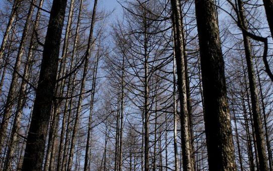 数本の木々
